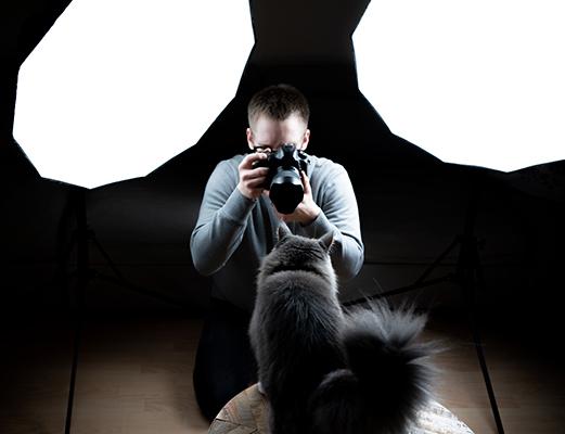 photo de chat avec softbox
